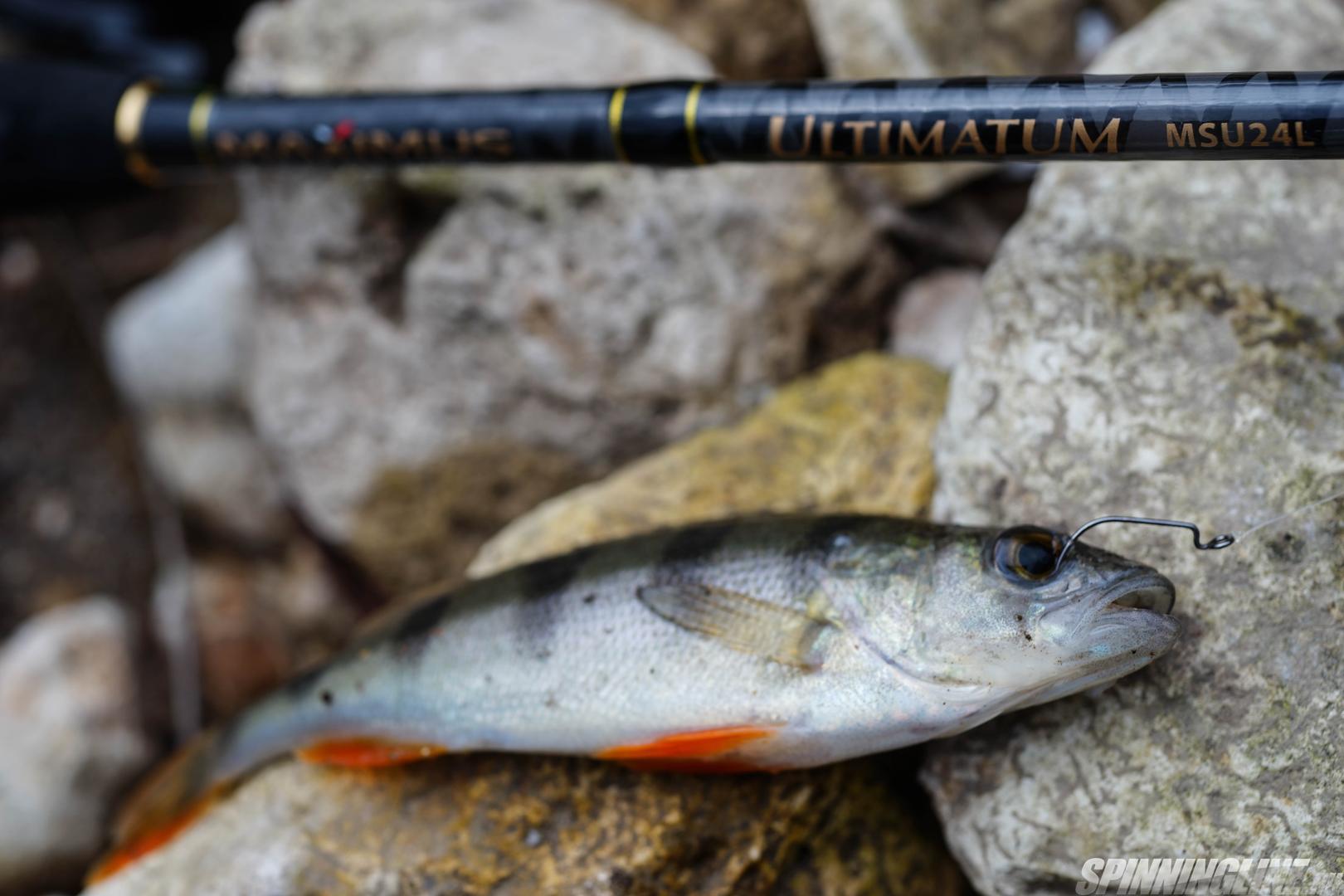 Ловля рыбы на отводной поводок: нет ничего проще