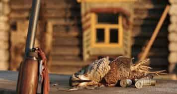 Охота на вальдшнепа во время весенней тяги