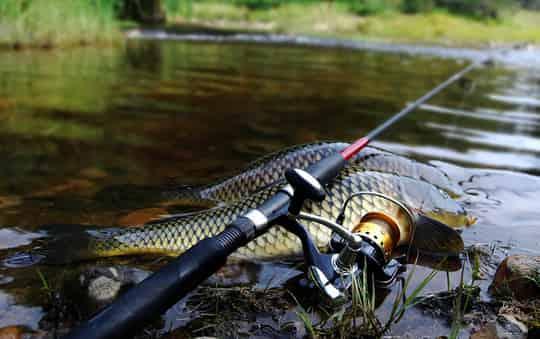 Рыбалка на фидер на реке: как выбрать удилище и место ловли
