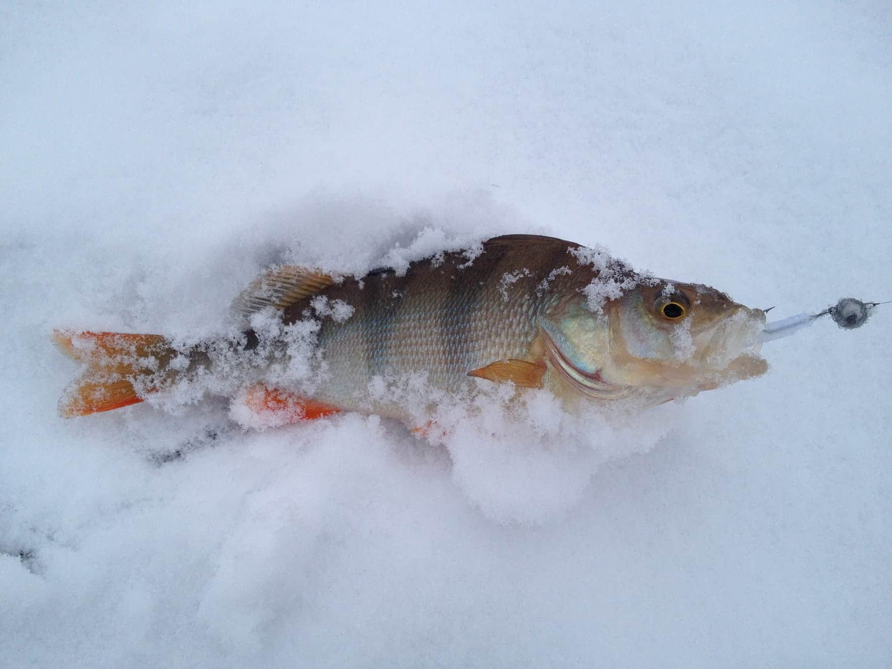 Мормышки для ловли на реке зимой