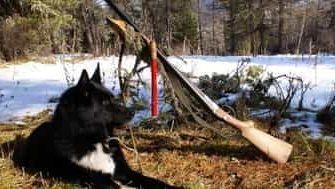 как охотиться на лося с подходом с лайками
