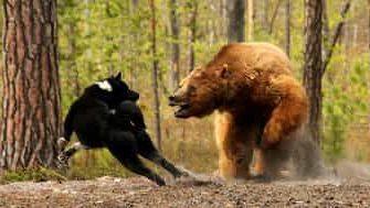 охота на медведя с гладкоствольным ружьём