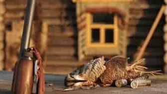 Охота на вальдшнепа во время весенней тяги: что это такое и как ее провести
