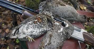 Охота на рябчика поздней осенью: как манить, какое оружие использовать