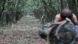 Загонная охота на копытных: что такое, этапы процесса и этика проведения