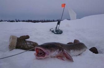 зимняя ловля сома