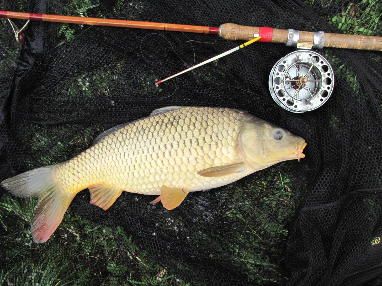 Рыбалка На Карпа Летом На Поплавочную Удочку