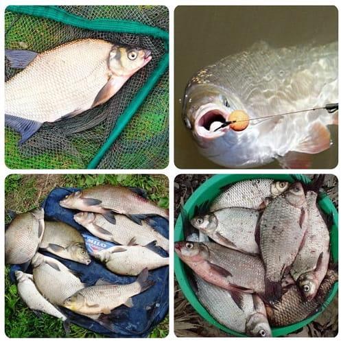 где поймать много рыбы
