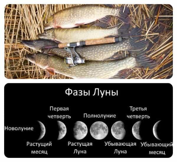 как реагирует щука на фазы луны