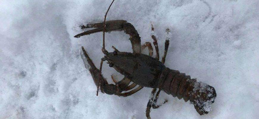 ловля раков в зимний перод со льда