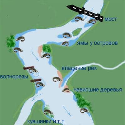 места обитания сома на реке