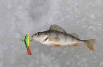 ловля окуня зимой на балансир