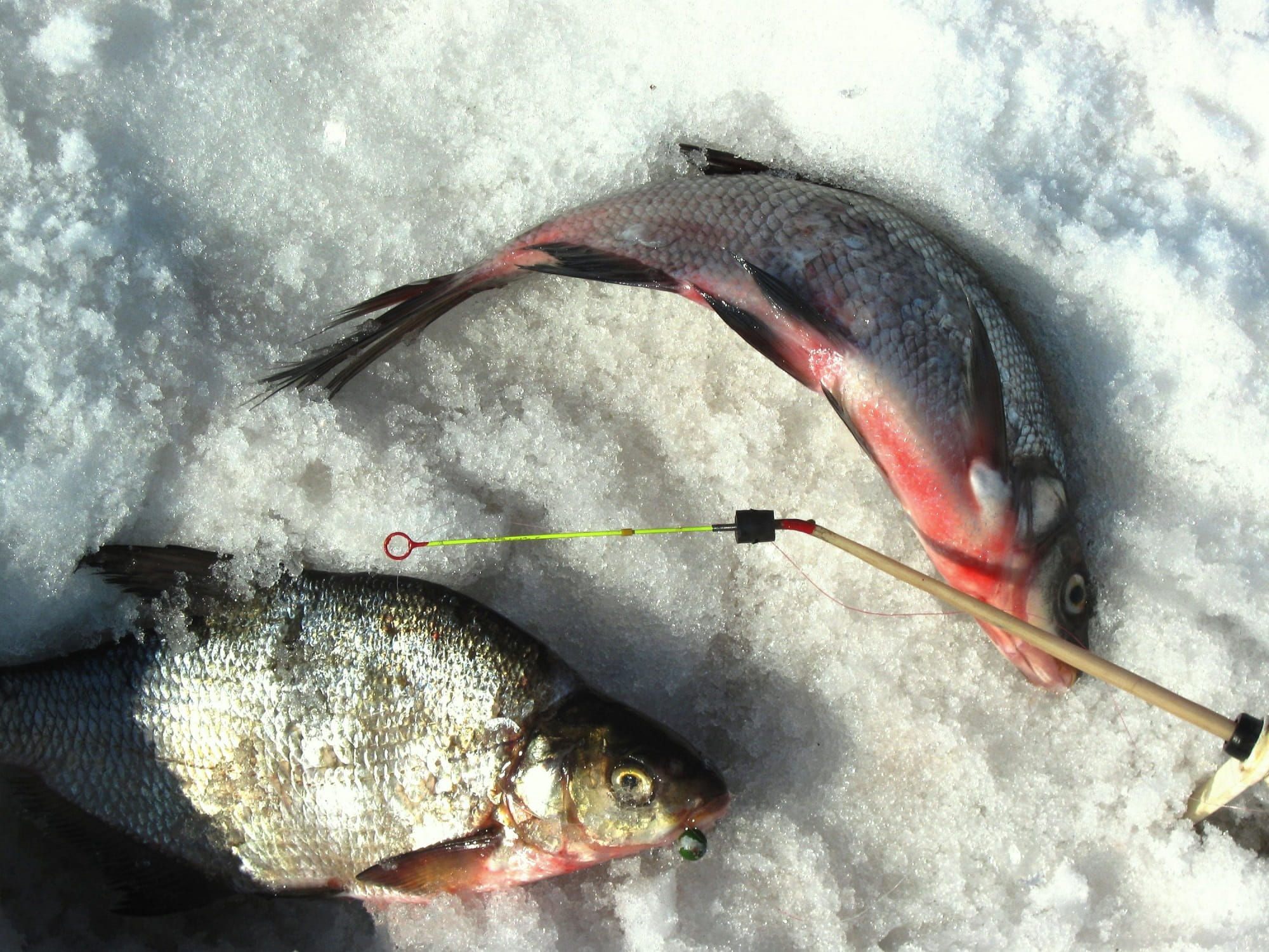 Ловля леща зимой - места и способы ловли, снасти, тактика ловли и советы.