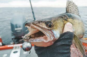 рыбалка на судака на джиг