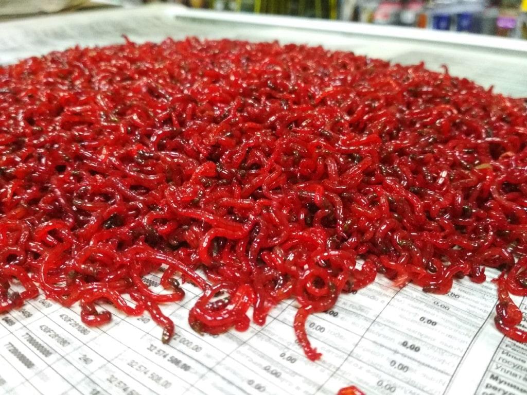Для рыбалки хорош мотыль красного цвета