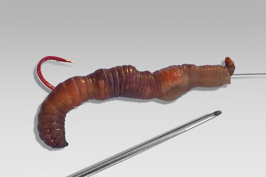 Насадка червя на крючок чулком