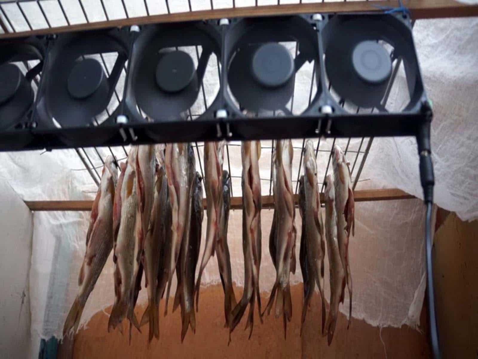 Дегидраторы для рыбы