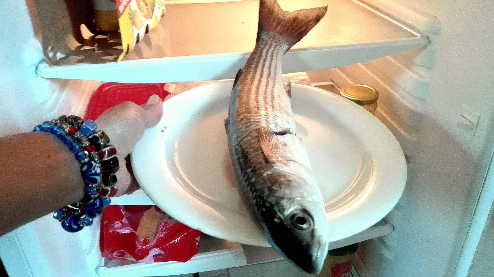 Сушка рыбы в холодильнике