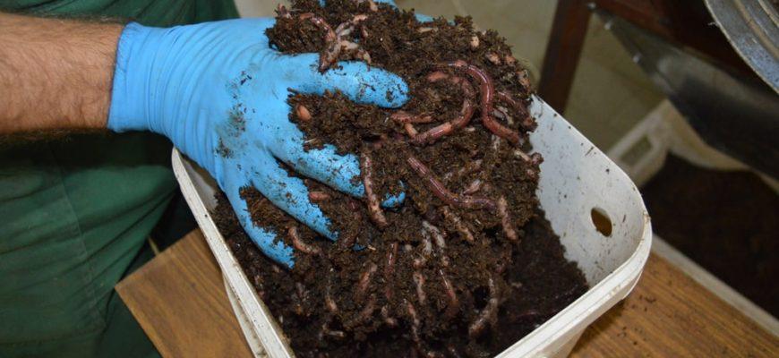 как сохранить червей для рыбалки