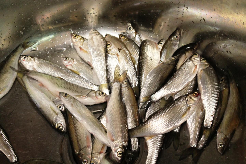 Ловля мелкой рыбы