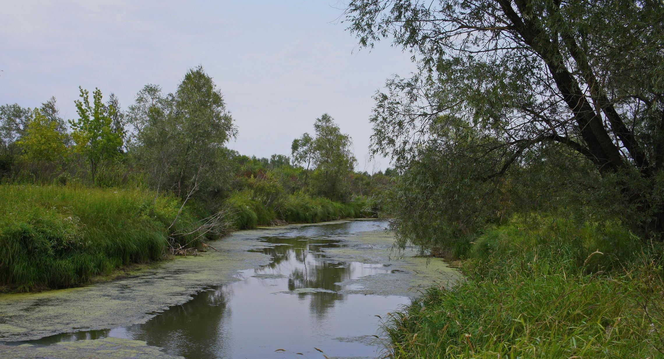 речка Кривая протока